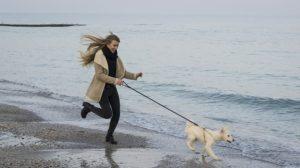 adventure_dog