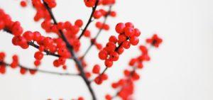 holidayberries_KrisAtomic